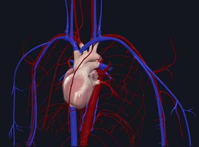 Le coeur humain